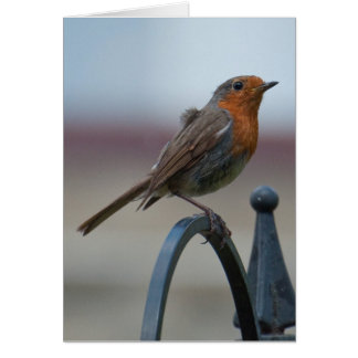 British Songbirds: Young Robin Card