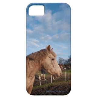 British spotted pony iPhone 5 cases