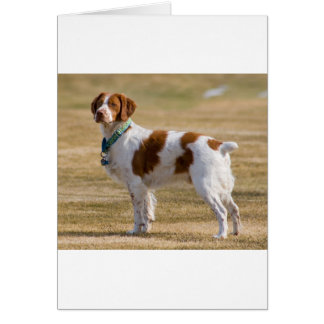 brittany-spaniel full.png card