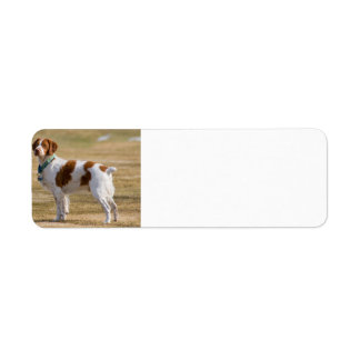 brittany-spaniel full return address label