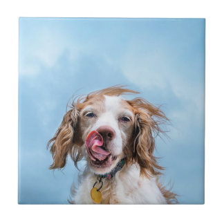 Brittany With Attitude Small Ceramic Tile