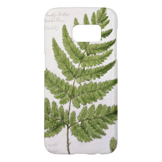Broad Prickly-toothed Buckler Fern, painted at Bra