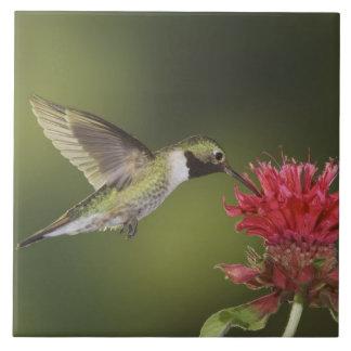 Broad-tailed Hummingbird, Selasphorus 2 Ceramic Tile