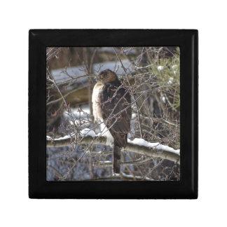 Broad-winged Hawk Gift Box