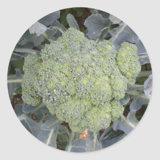 Broccoli Stickers