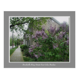 Brockville King Street East Lilac Bushes Poster