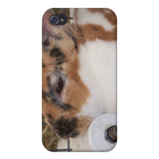Broken tri color mini rex rabbit head on waterer case for iPhone 4