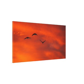 Brolgas flying at sunset canvas print