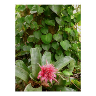 Bromeliad and Vines Poster