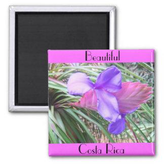 Bromeliads of Costa Rica Magnet