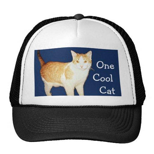 Bronco The Cat Hats