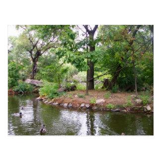 Bronx Zoo Postcard