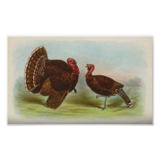 Bronze Turkeys Poster