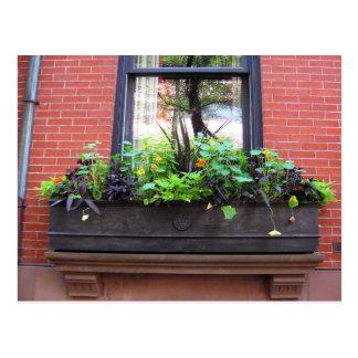 Brooklyn Window Postcard