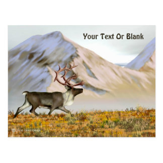 Brooks Range Caribou Postcard