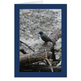 Brother Grackle Greeting Card