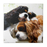Brothers Cavaliers Ceramic Tiles