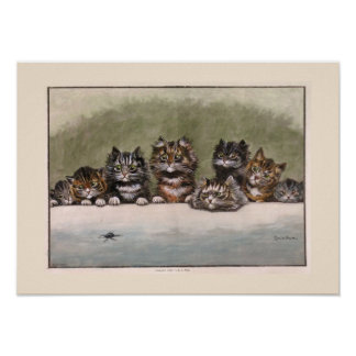 Brown and Grey Tabby Kittens Poster