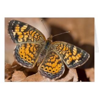 Brown and Orange Moth Apparel and Gifts Greeting Card