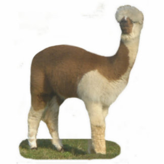 Brown And White Alpacs Photo Sculpture Decoration