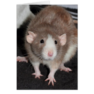 Brown and White Fancy Rat Card