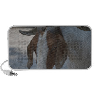 brown and white goat travelling speaker