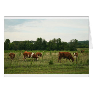 Brown and White Hereford Cattle Card