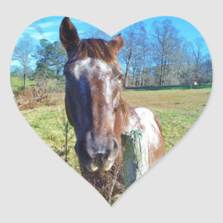 Brown and white horse  blue skys heart sticker
