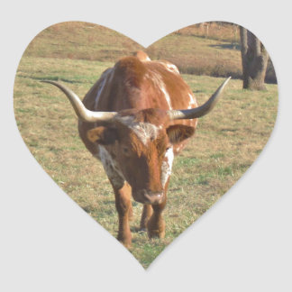 Brown and White Longhorn Bull Blue Sky Stickers