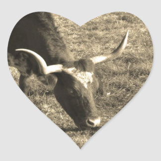Brown and White Longhorn Bull White and Brown ca Stickers