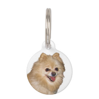 Brown and White Pomeranian Dog Pet ID Tag