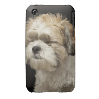 Brown and white Shih Tzu with eyes closed iPhone 3 Covers