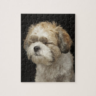 Brown and white Shih Tzu with eyes closed Jigsaw Puzzle