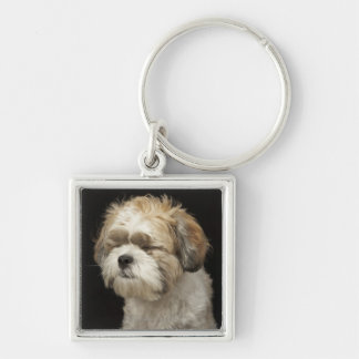 Brown and white Shih Tzu with eyes closed Key Ring