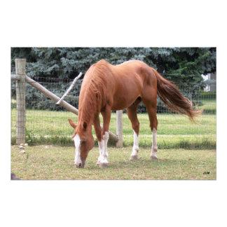 Brown and White Sorrel Horse Photo Print