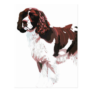Brown and white Springer Spaniel card