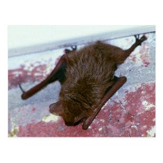 Brown Bat Postcard