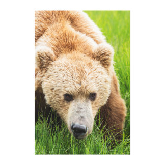 Brown Bear Stretched Canvas Prints