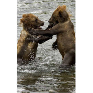 Brown bear cubs wrestling in the water cut out