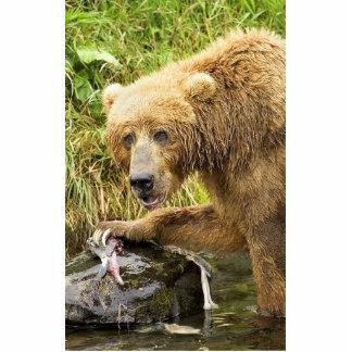 Brown bear feeding on salmon photo sculpture