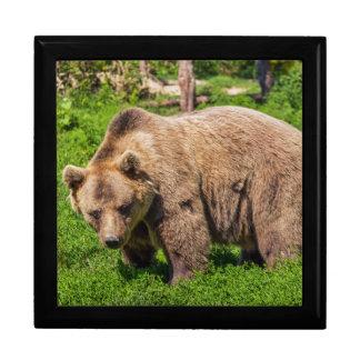 Brown bear gift box