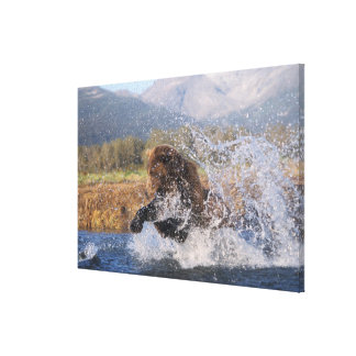Brown bear, grizzly bear, catching pink salmon, gallery wrap canvas
