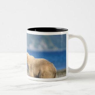 Brown bear, grizzly bear, play on the beach, Two-Tone coffee mug