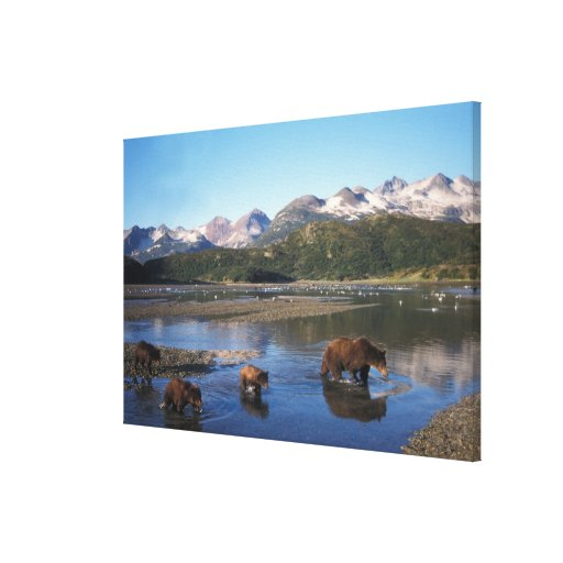 Brown bear, grizzly bear, sow and cubs in stretched canvas print