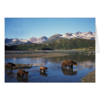 Brown bear, grizzly bear, sow and cubs in card