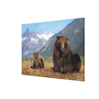 Brown bear, grizzly bear, sow with cub on canvas print