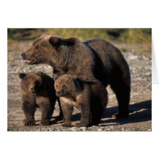 Brown bear, grizzly bear, sow with cubs looking greeting card