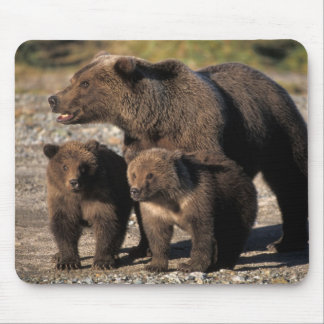 Brown bear, grizzly bear, sow with cubs looking mouse pad