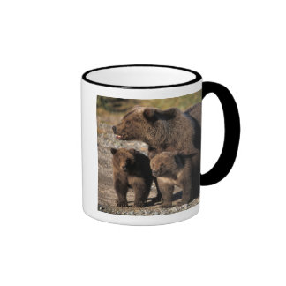 Brown bear, grizzly bear, sow with cubs looking ringer mug