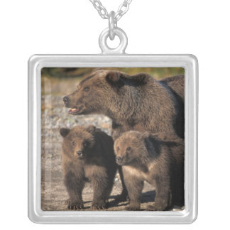 Brown bear, grizzly bear, sow with cubs looking square pendant necklace